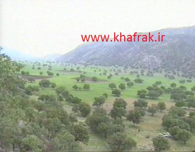 جامعه جنگلی بلوط، شهرستان ممسنی، گلگون